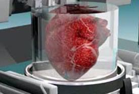 Stampanti 3D: in grado di stampare organi umani