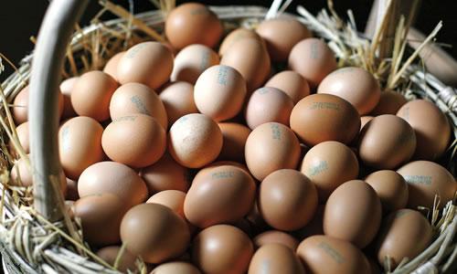 uova non allergiche
